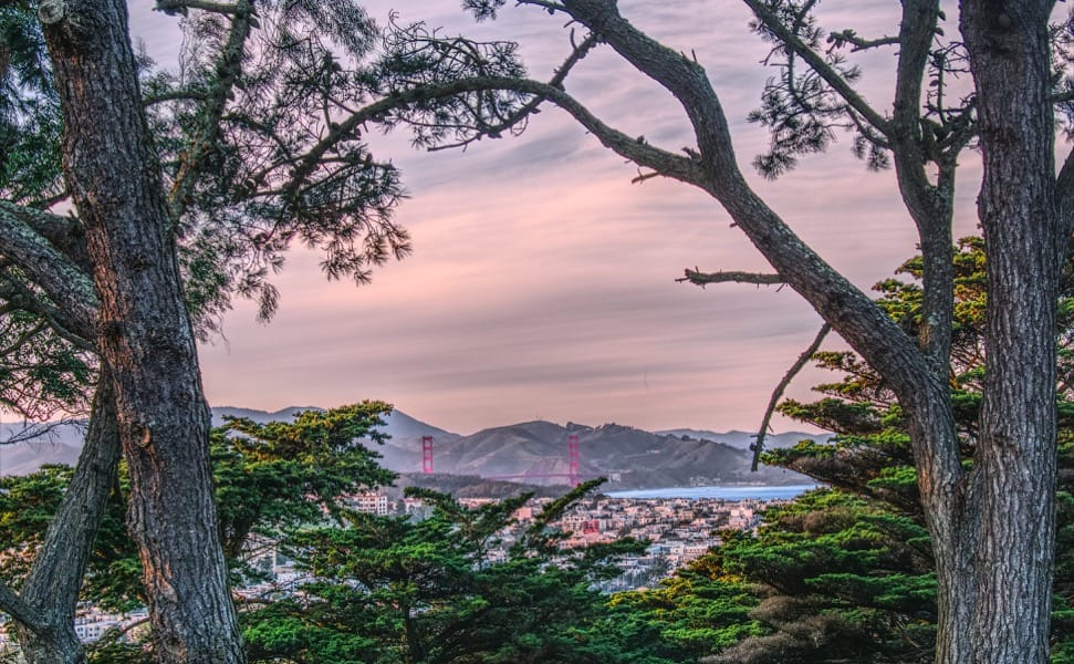 Buena Vista Park, looking down to the Golden Gate Bridge